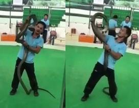 Kinh hãi nghệ sĩ biểu diễn rắn bất ngờ bị hổ mang tung cú cắn chết người