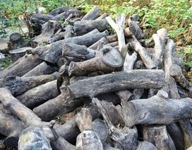 Gỗ cây cổ thụ chất đống nhiều năm trong công viên giữa Thủ đô