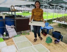 Quảng Nam: Cử nhân tiếng Anh bỏ phố về quê trồng rau thủy canh