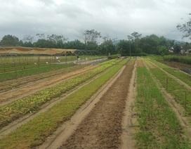 Đà Nẵng: Nông dân mất trắng sau trận mưa lịch sử