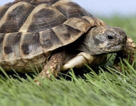 Rùa đực trở thành con cái vì nóng lên toàn cầu