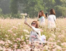 Vườn hoa tam giác mạch 5.000 m2 ở Hà Nội thu hút người tham quan