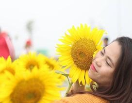 """Giới trẻ Sài thành """"phát cuồng"""" với vườn hoa hướng dương khổng lồ"""