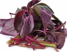 Những lợi ích sức khỏe của rau dền
