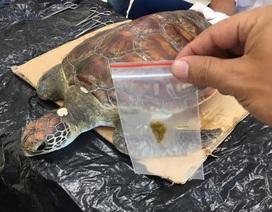 """Rùa biển suýt chết vì """"ngộ độc"""" đủ loại rác thải"""