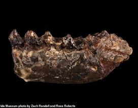 """Tìm thấy hoá thạch động vật là """"tổ tiên"""" sớm nhất của con người"""
