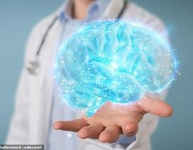 Những người có bộ não lớn hơn sẽ… thông minh hơn