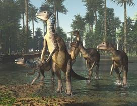 Khám phá ra loài khủng long mới tại Australia