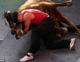 Xem võ sỹ Trung Quốc hạ gục con bò nặng 400kg bằng tay không chỉ trong vài phút
