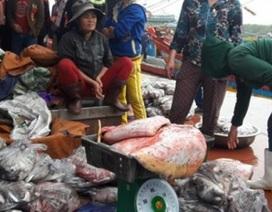 Trúng mùa biển cuối năm, ngư dân xứ Nghệ lãi 60-70 triệu/tàu