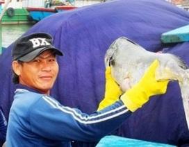 Đầu năm, ngư dân Bình Định trúng đậm cá ngừ sọc dưa, thu về tiền tỷ