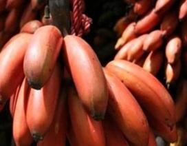 Chị em săn chuối tím đỏ siêu lạ về chưng Tết, có tiền cũng khó mua