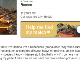 """Đăng tin tuyển """"bạn đời"""" cho ếch trên trang hẹn hò"""