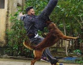 Huấn luyện chó nghiệp vụ - Gian khổ và thậm chí đổ máu!
