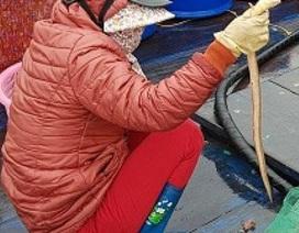 """Sắp đến Tết, ngư dân miền biển vẫn ra khơi """"săn"""" hải sản cuối năm"""