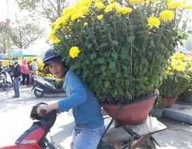Chợ hoa Tết chiều 29, cúc, đào vẫn ế vì đâu?