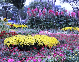 Ngất ngây với muôn sắc xuân ở con đường hoa rực rỡ bên sông Hàn