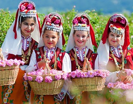 1000 cây hồng Bulgaria sẽ được trưng bày tại Lễ hội Hoa hồng 2018