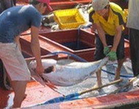 Ngư dân Phú Yên ăn Tết trên biển, đón vụ cá đầu năm