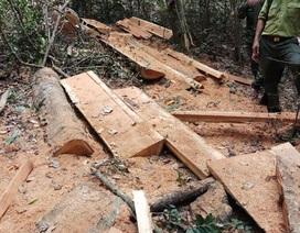Điều tra vụ phá rừng quy mô lớn tại Vườn quốc gia Yok Đôn