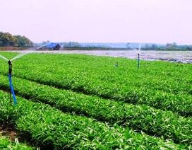 FDI vào nông nghiệp quá thấp do đâu?