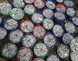 Quảng Ngãi: Ngư dân kiếm từ 5 - 7 triệu đồng chỉ sau một đêm ra khơi