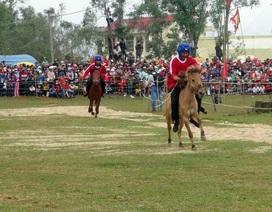 Sôi động hội đua ngựa truyền thống Gò Thì Thùng