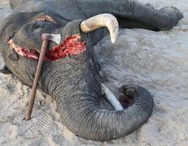 Hồng Kông bỏ phiếu chấm dứt việc buôn bán ngà voi trong nước
