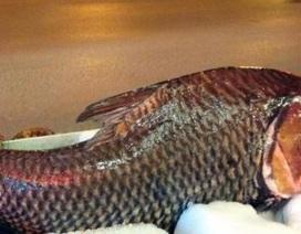 """Chi cả trăm triệu, """"rước"""" cá hô khủng từ Campuchia về Hà Nội ăn Tết"""