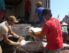 Cá ngừ đại dương được mùa được giá, ngư dân trúng đậm
