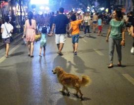 Hà Nội: Muốn nuôi chó phải đăng ký với chính quyền