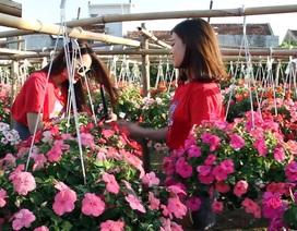 """""""Vườn hoa Đà Lạt giữa phố"""" điểm đến hấp dẫn khi du khách đến Phú Yên"""