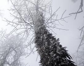 Hình ảnh băng tuyết phủ trắng vùng cao Lào Cai