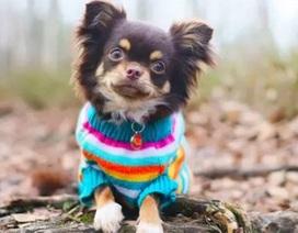 Đố vui: Bạn có biết tên các giống cún cưng?
