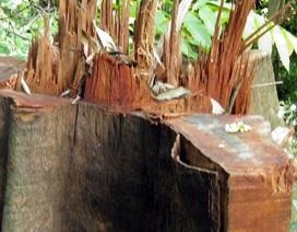 Đề nghị kiểm lâm Lào hỗ trợ truy quét lâm tặc