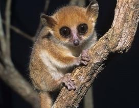 Hơn 1.000 loài động vật có vú mới được phát hiện trong vòng 12 năm qua