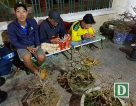 """Người bán mai An Nhơn thức """"trắng đêm"""" chờ khách ở Nha Trang"""