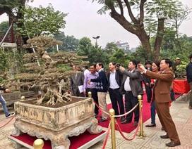 """Xôn xao thương vụ mua bán """"siêu cây"""" 8 tỷ, độc nhất Việt Nam"""