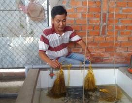 Vĩnh Long: Bỏ làm giám đốc về quê nuôi lươn kiếm tiền tỷ