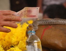 """Đưa con rắn được đồn thổi là rắn """"thần"""" ra khỏi mộ người ăn xin"""