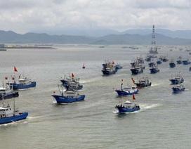 Biển Đông đang suy kiệt nguồn cá do đánh bắt huỷ diệt