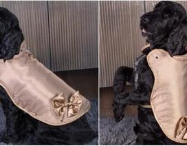Áo khoác cho chó làm từ vàng 24 karat