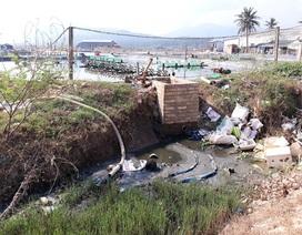"""Bình Định: Vùng nuôi tôm """"an toàn sinh học"""" gây ô nhiễm!"""