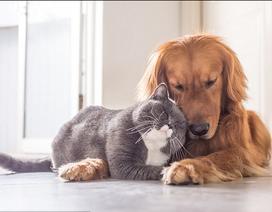 Các mối nguy hại nên đề phòng khi nuôi thú cưng