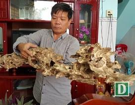 """Những mẫu trầm có hình thù kỳ dị ở """"xứ trầm"""" Khánh Hòa"""