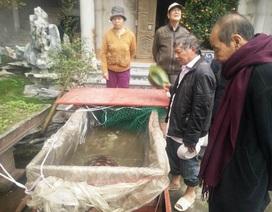 """Nhà chùa giải cứu """"cụ"""" rùa 6kg  suýt bị xẻ thịt"""