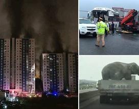 Cháy chung cư Carina Plaza và xe khách tông xe cứu hỏa trên cao tốc