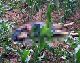 Hà Nội: Phát hiện thi thể nam thanh niên ở bãi ngô sau cuộc ẩu đả
