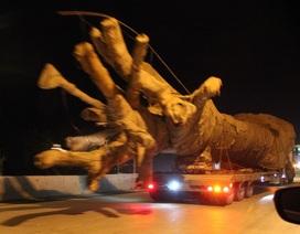 """Xe chở cây khủng như """"quái thú"""": Cây của Thiếu tướng CSGT?"""