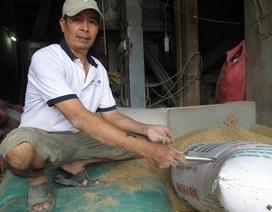 Đồng ý giao 3 cây vàng quên trong bao lúa cho địa phương giữ